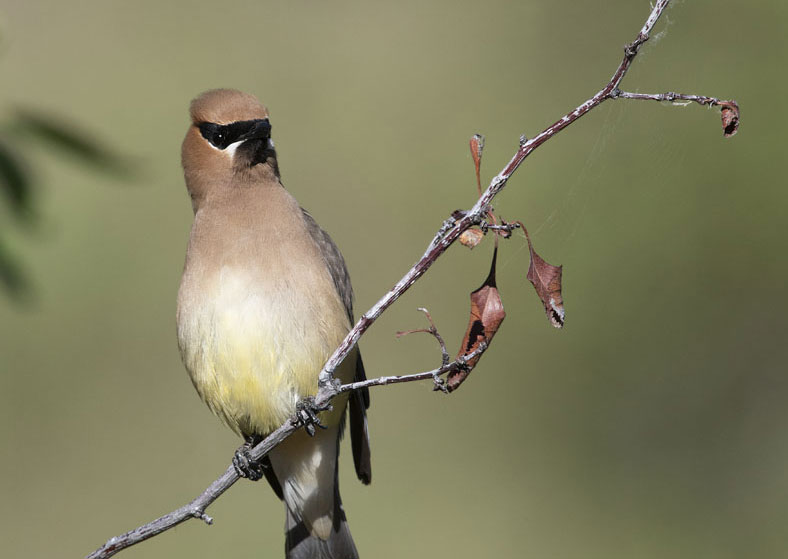 bird-survey